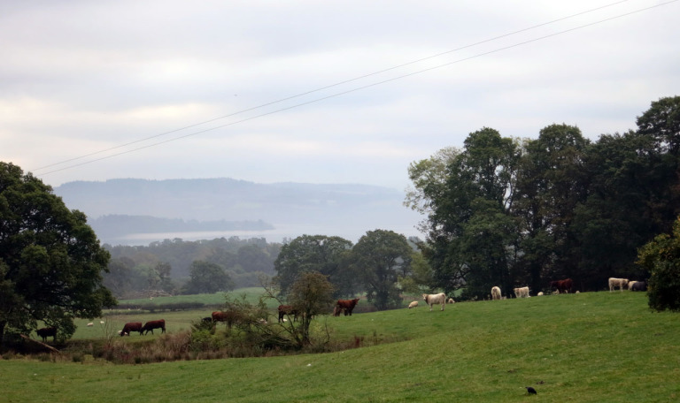 View of Loch Lomond from Shantron Farm
